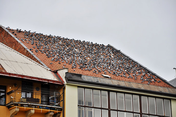 A2B Pest Control are able to install spikes to deter birds from roofs in Richmond Upon Thames.