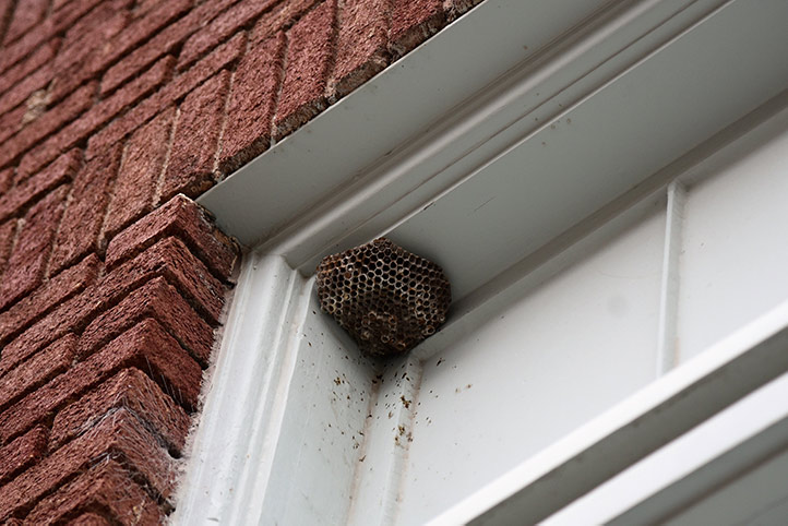 We provide a wasp nest removal service for domestic and commercial properties in Richmond Upon Thames.